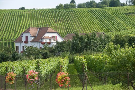 Property in France with a vineyard