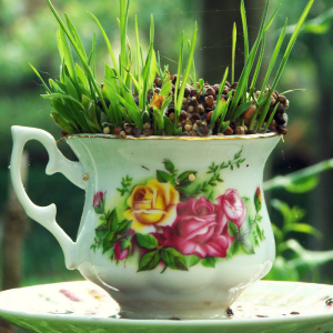 Teapot potted with plants