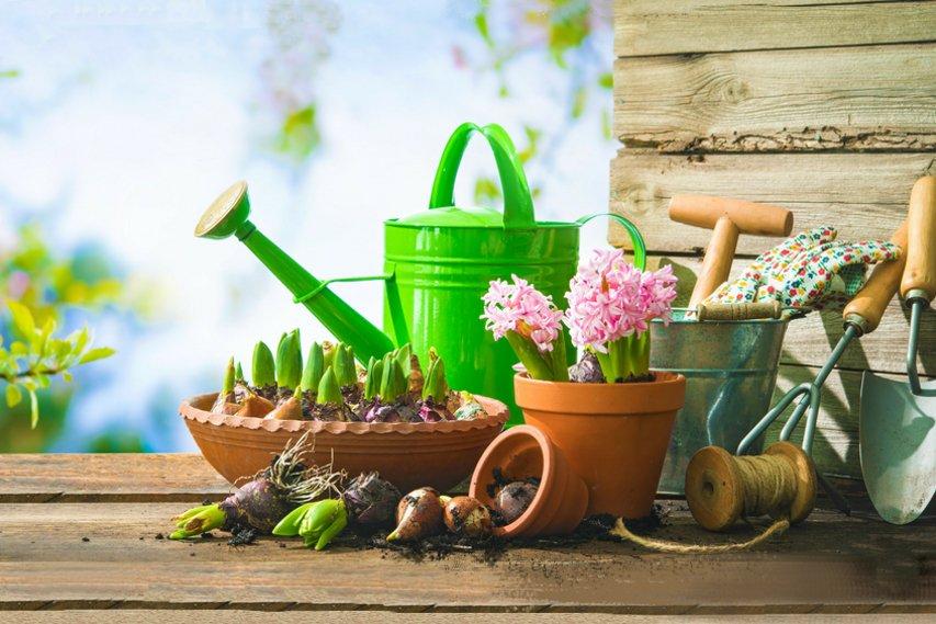 5 Spring Gardening tips