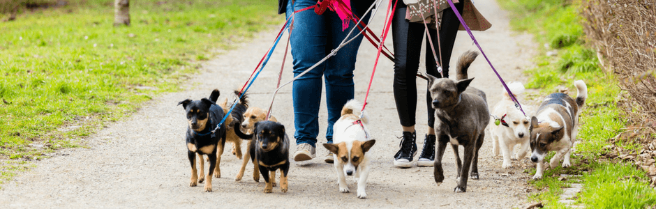 dog walkers with dogs